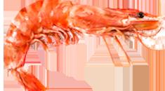 Shrimp Dishs